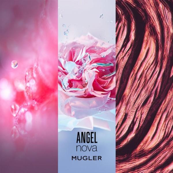Angel Novar (Refill)