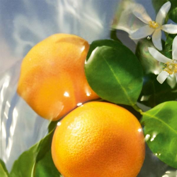 Aqua Allegoria Mandarine Basilic